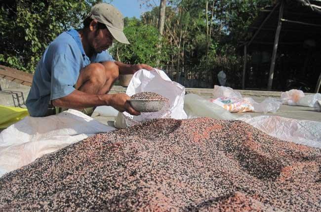 Phân bón giả, kém chất lượng gây thiệt hại cho nhà nông